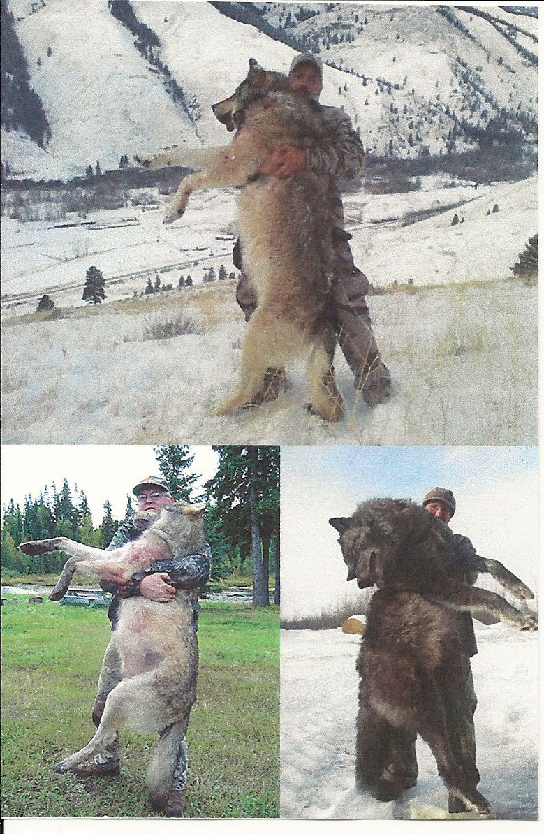 Wolves of Idaho