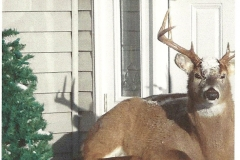deer on the porch - Copy